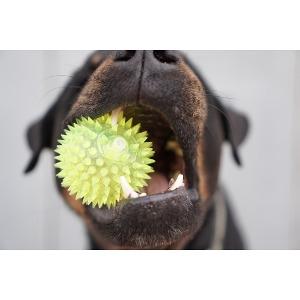 Dog Toys- Buy 1, Get 2nd 50% Off