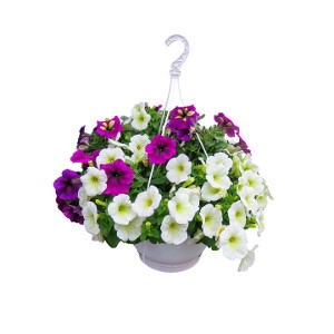 $2 Off Hanging Baskets