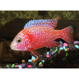 10% Off Fish Supplies