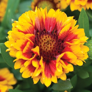 Fall Perennials Sale