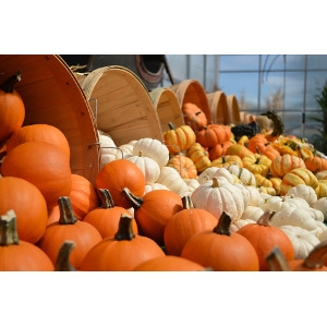 Fall Decorating Items
