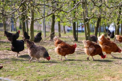 Maintaining a Healthy Flock
