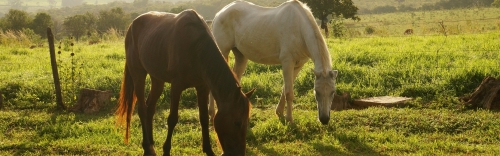 Discussions at Dover: Equine Gut Health Symposium