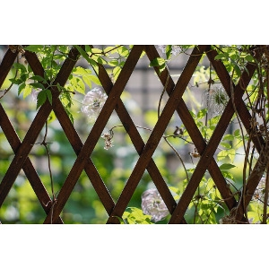 20% Off Any In Stock Garden Trellis