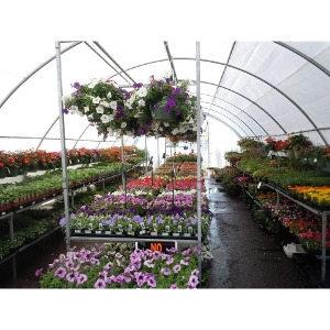 Nursery Stock- $10 Off $75 Order