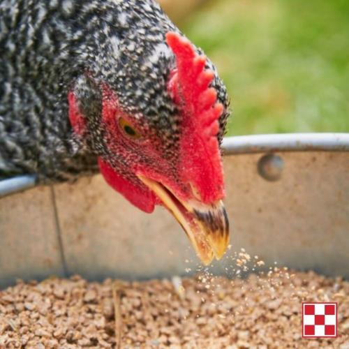 Purina® Flock-Tober