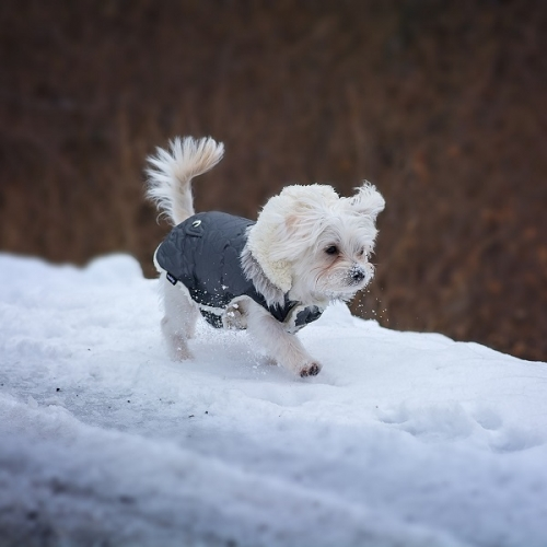 25% off In-Stock Dog Outerwear