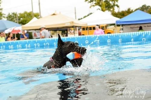 Fayetteville Pet Fest 2017