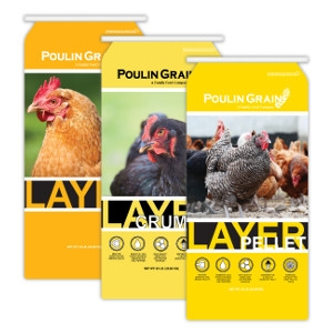 Poulin Grain Egg Layer Feed Sale!