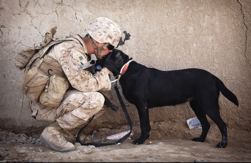 Warrior Canine Connection Veteran's Day Campaign