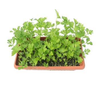 Veggie Starter Plants