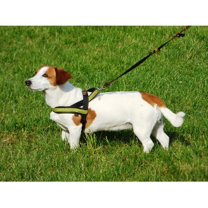 Pet Leashes, Harnesses and Collars