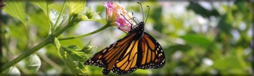 Drape Your Home & Garden...