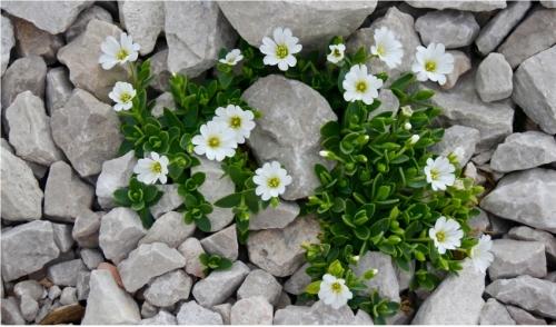 Plant a Rock Garden