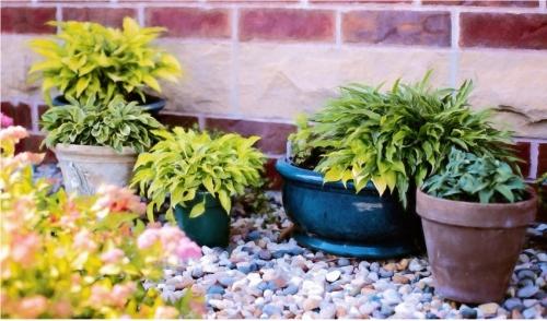Get Ready, Get Set, Plant!