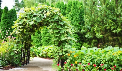 Build a Vine-Covered Archway to your Yard