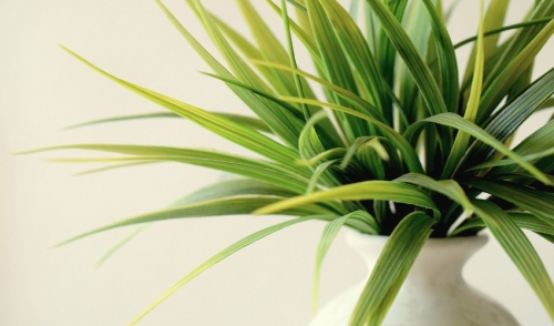 Protecting Indoor Plants This Winter