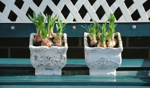 Think Spring & Plant Your Bulbs
