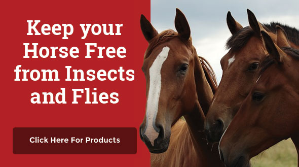 Keep your Horse Free from Insects and Flies