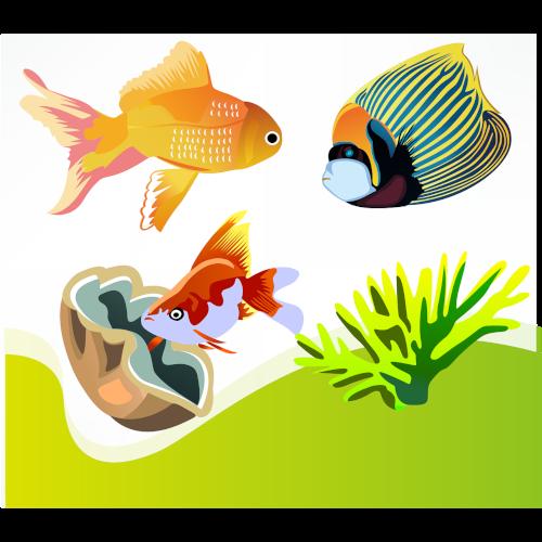 20% OFF Fish Ornaments