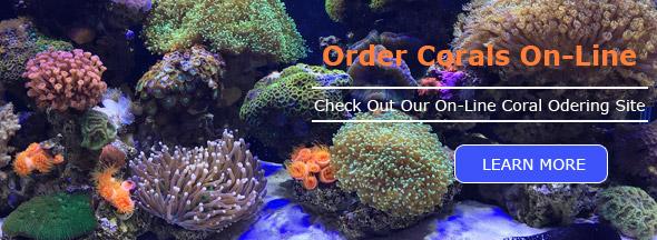 Coral Orders