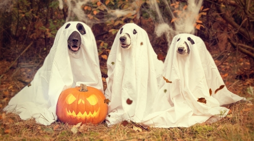 Halloween Costume Contest