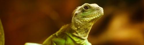 Reptiles & Aquatics