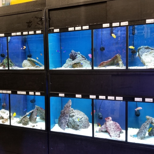 25% off Any 1 Saltwater Fish, Invert, or Coral