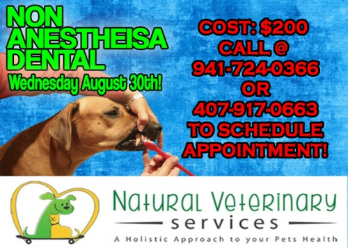 Anesthesia Free Dental Monthly Cleanings