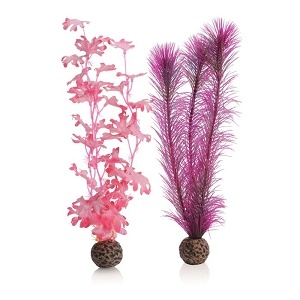 Medium Pink Kelp Plants