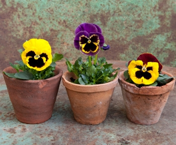 Plant Mom a Flower!