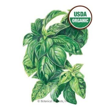 Organic Italian Basil Seed