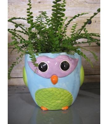 Hills Imports Owl Pot