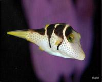 aquarium with fish image