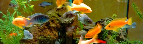Aquarium, reptile, & small animal needs