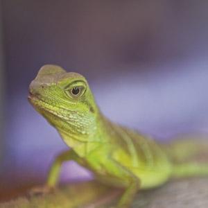Celebrate Reptile Awareness Day!