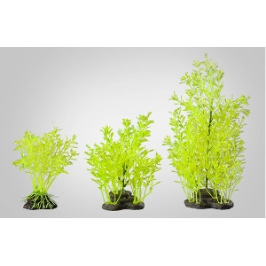 Elive Neon Green Lidernia- Medium 5-6