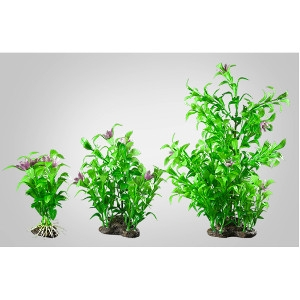 Elive Blooming Ludwigia- Medium 5-6