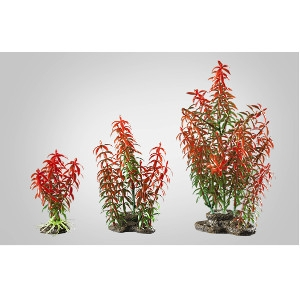 Elive Red Rotala- Medium 5-6