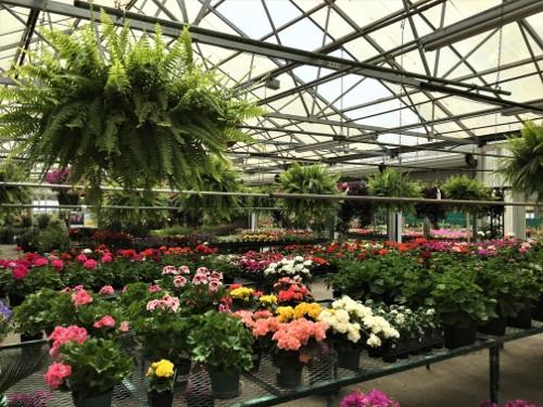 Plants, Herbs, Shrubs, Trees, Flowers Galore!