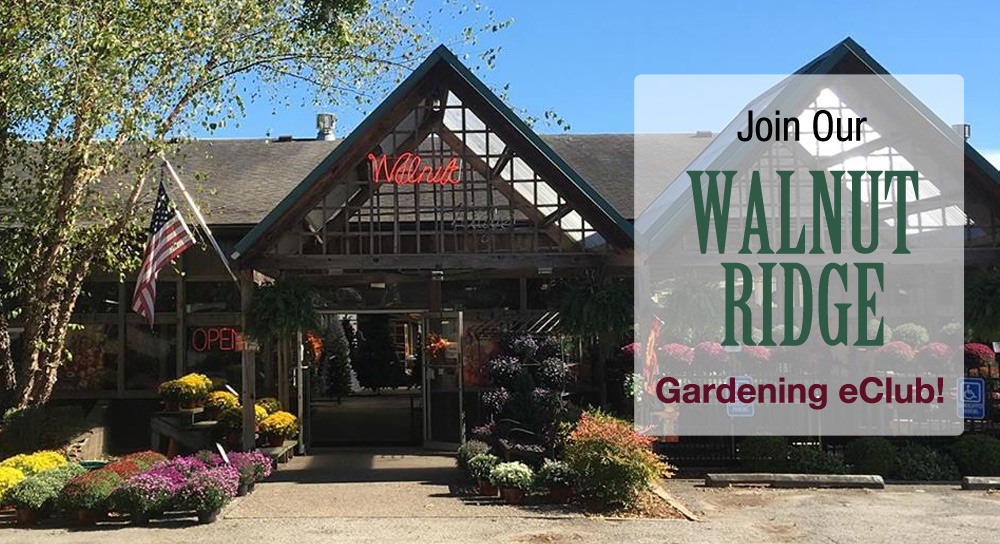 Walnut Ridge E-Club