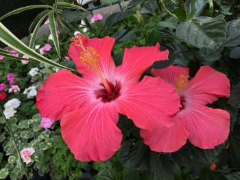 Save on All Annuals & Tropicals