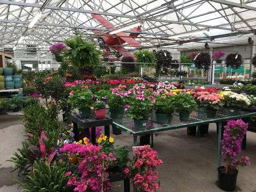 Walnut Ridge Greenhouse