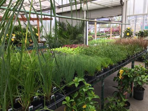 Walnut Ridge Herbs