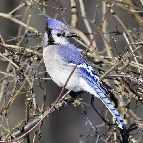 Free Wild Bird Seminar Willimantic Store