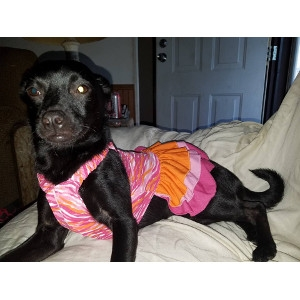 Zack & Zoey Sun And Sea Ruffle Dress For Dogs With UPF 40