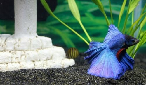 Aquarium Setup Tricks & Design Ideas