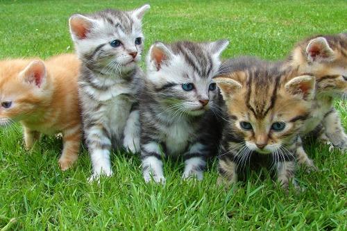 New Kitten Tips