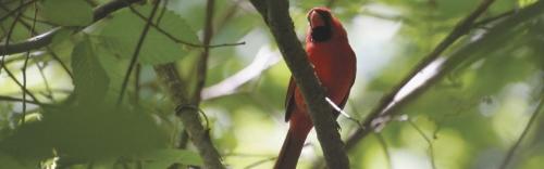 Wild Bird & Wildlife