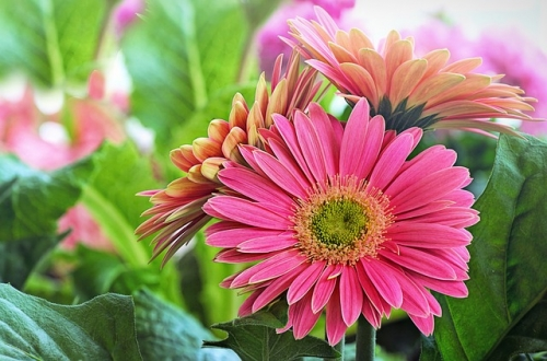 50% Off All Remaining Annual Flowers